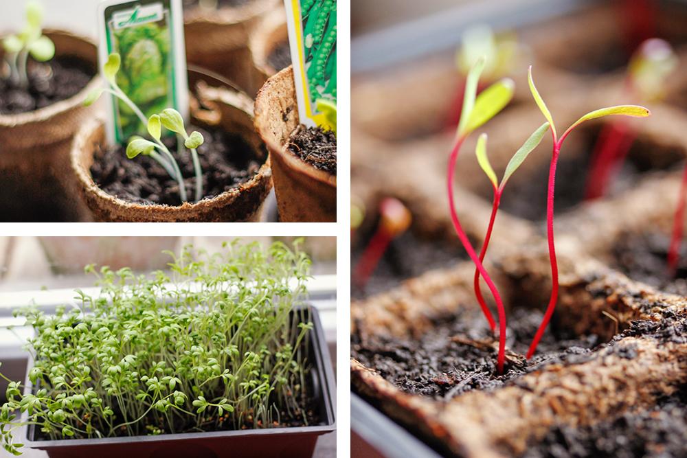 Urban Farming Die Anzucht Gute Saat Bringt Reiche Ernte