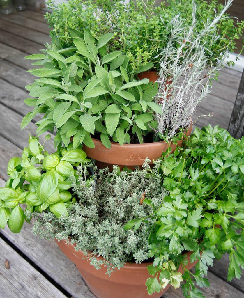 Table Pour Balcon Étroit idées pour un jardin d'herbes aromatiques sur un petit balcon