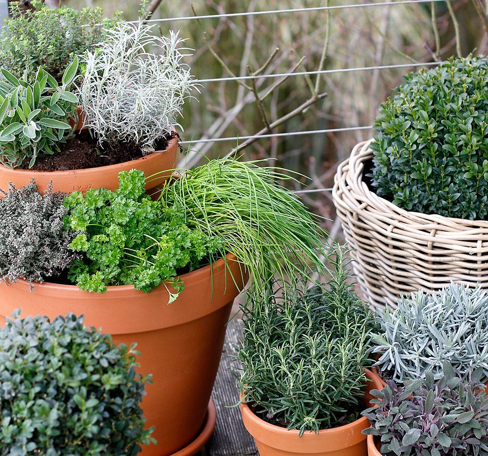 Umgestaltung krautergarten dachterrasse  Platzsparende Ideen für einen Kräutergarten auf dem Balkon