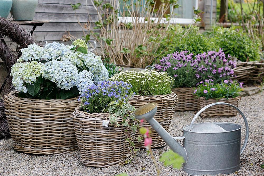 Prächtig Charming Garden – romantische Sommerpflanzen @DQ_39