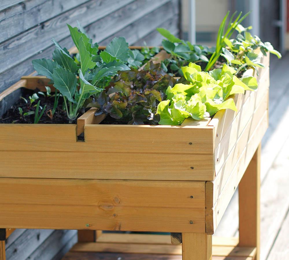 Super Urban Farming – Selbstversorgung auf Balkon und Terrasse OA66