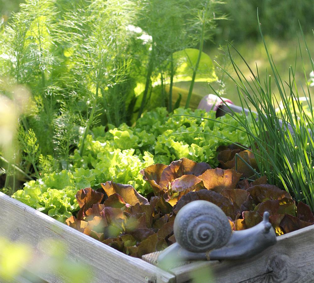 urban farming – selbstversorgung auf balkon und terrasse