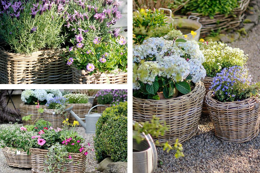 charming garden romantische sommerpflanzen. Black Bedroom Furniture Sets. Home Design Ideas