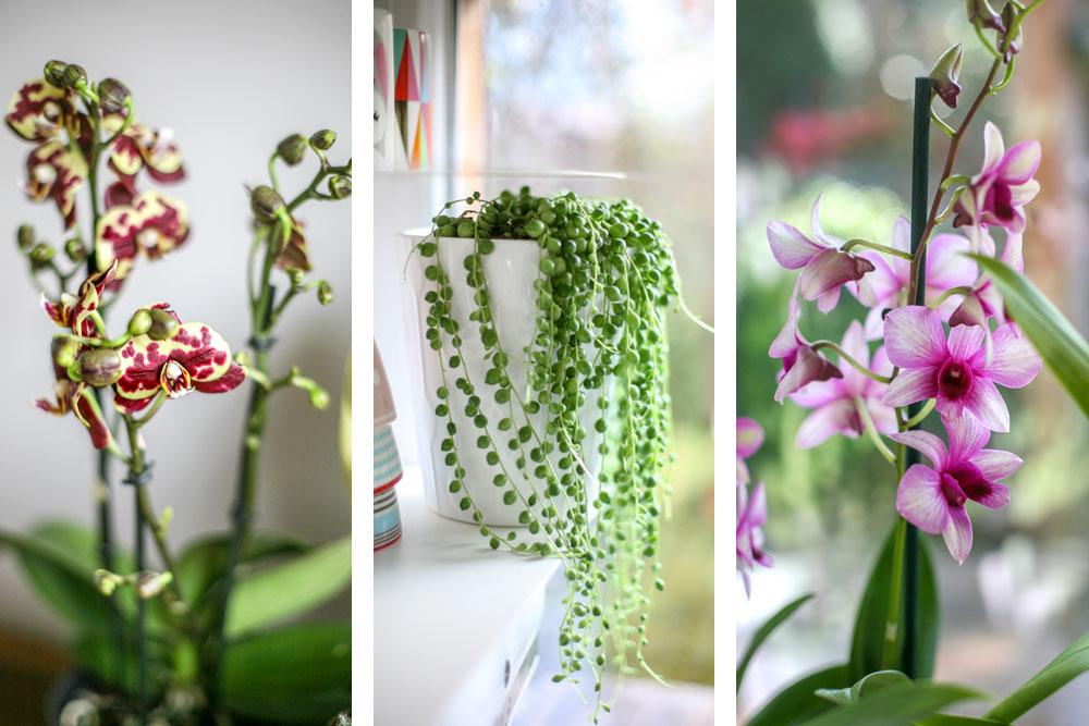 Mit Zimmerpflanzen Zum Urban Jungle Look Alle Tipps Und Tricks